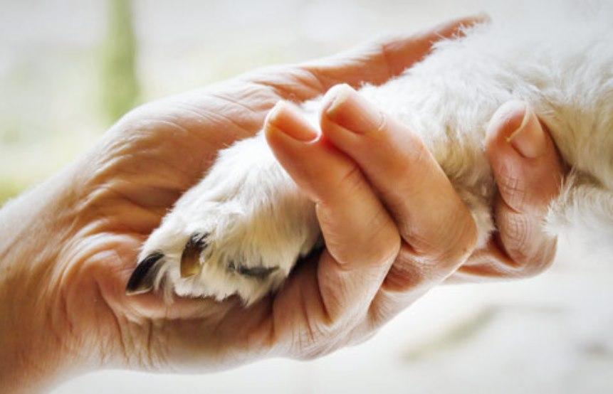 terapie-con-animali-lisola-che-c